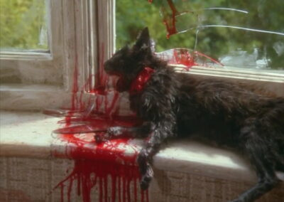 The House That Bled to Death dead cat